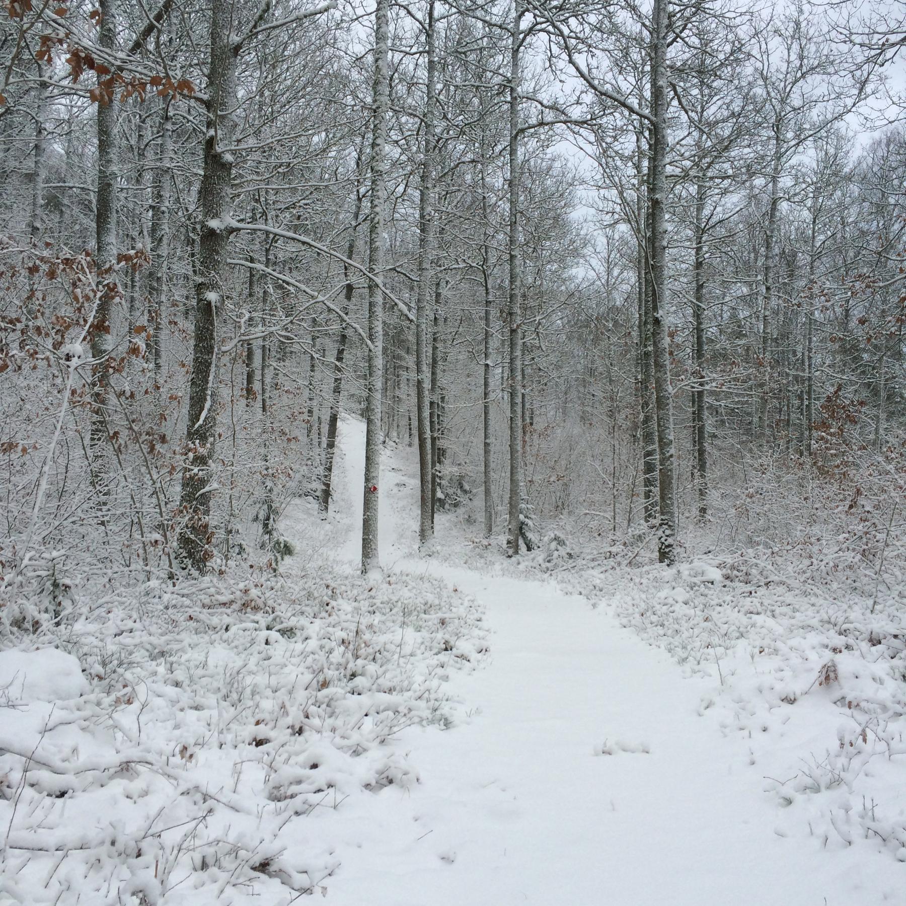 Schweden Winterspaziergang